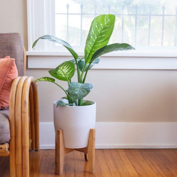 Buy Indoor Plants in Delhi
