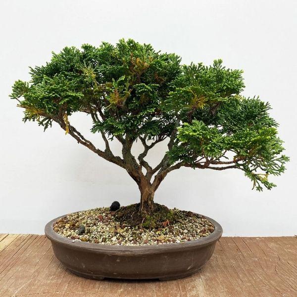 Buy Indoor Plants Delhi