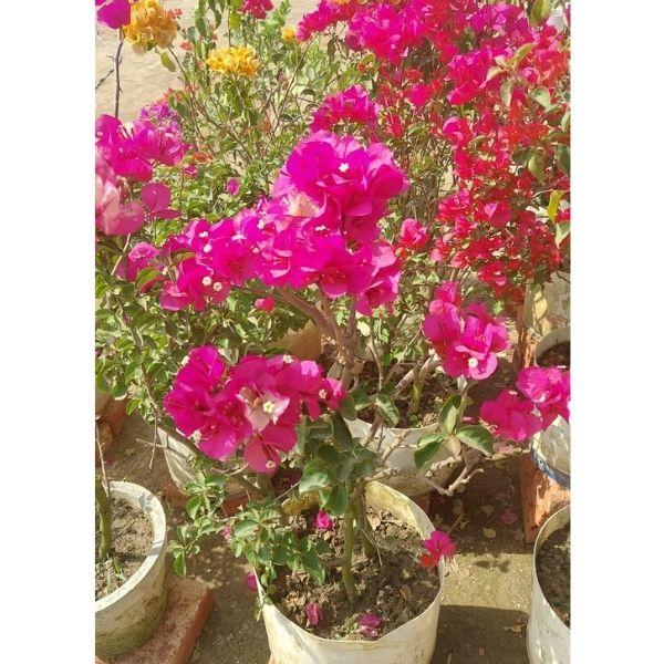 Buy Indoor Plants in Delhi NCR