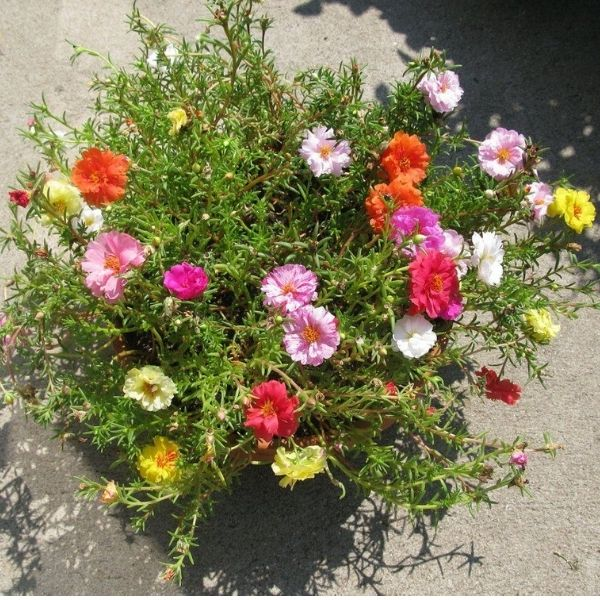 Buy Home Décor Plants in Delhi