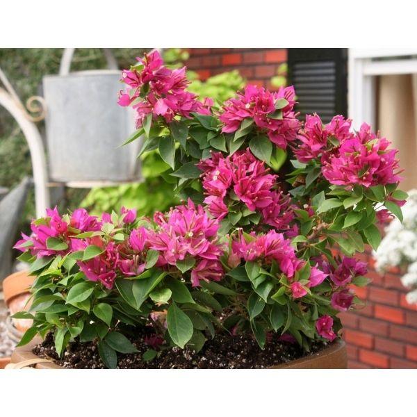 Indoor Plants For Home in Delhi NCR