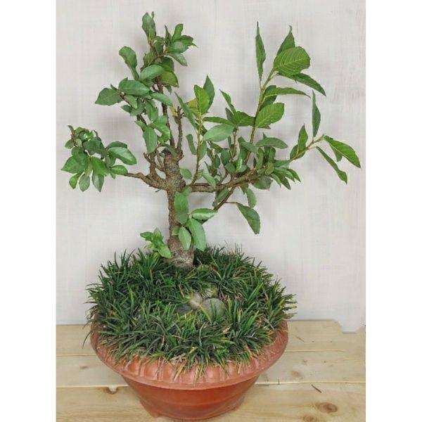 Indoor Plants Online Buy Delhi