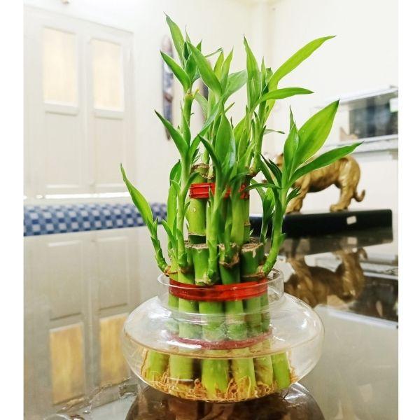 Indoor Plants For Home in Delhi