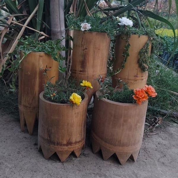 Indoor plants online in Delhi