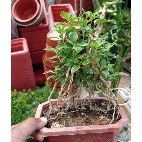Indoor Plants in Delhi For Home