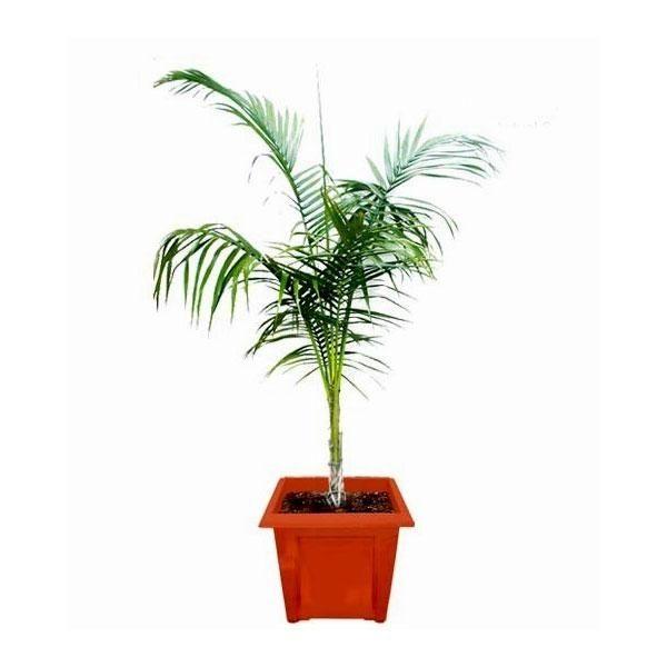 Buy Online Plants in Delhi